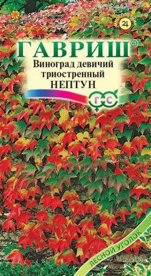 Виноград  девичий/Партеноциссус/триостренный Нептун 5 шт.