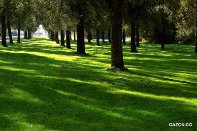 Агротекс - 97 — Газон — Семена газонных трав