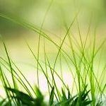 Моё поместье. Товары для сада! — Газоны. Отдельные виды трав. — Семена газонных трав