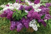 Духи Lilac (Сирень) 100 мл