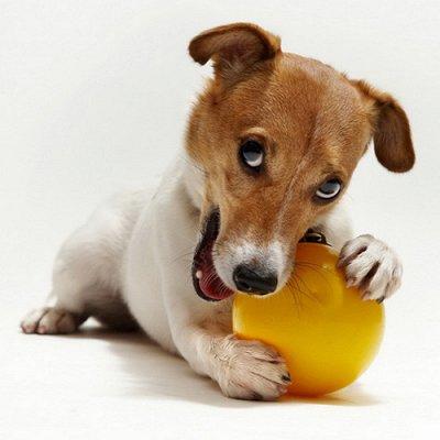 Хвостатая закупка для ваших питомцев-87 — Игрушки для собак — Для животных