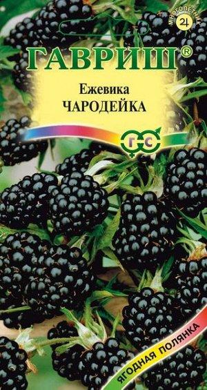 Ежевика Чародейка 10 шт.