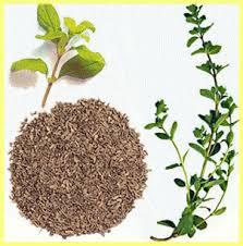 Майоран Майоран обладает приятным нежным ароматом,н апоминающем запах свежевыкошенных трав. Обязательно сочетается с чесноком. В супы, соусы и тушёные блюда закладывают в процессе приготовления, к нат
