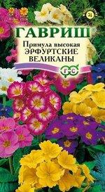 Примула Эрфуртские великаны* 20 шт. серия Устойчив к заморозкам!