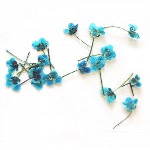 Сухоцветы для дизайна 09