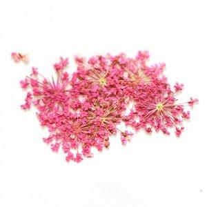 Сухоцветы для дизайна 23