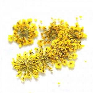 Сухоцветы для дизайна 22