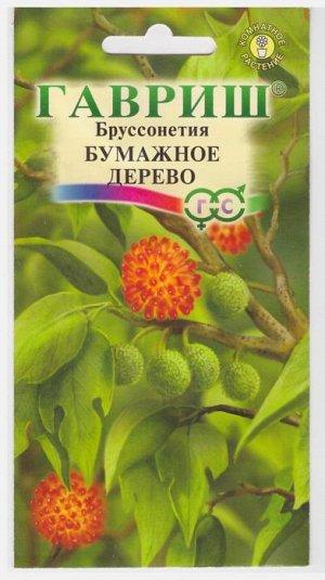 Бруссонетия Бумажное дерево (Код: 14921)