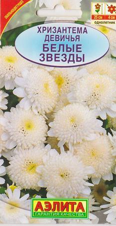 Хризантема Девичья Белые звезды (Код: 6427)