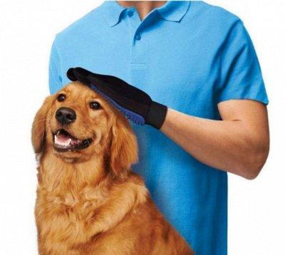 Одежда, аксессуары, авто-техно, мелочи для дома и хобби  — Для братьев наших меньших — Для собак