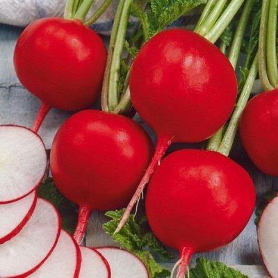 Русский огород - семена овощей, цветов  В наличии — Редис, Редька, Дайкон — Семена овощей