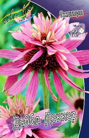 Пакетированные многолетники!олетники! — Эхинацея — Семена цветов