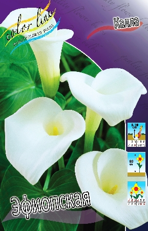 Пакетированные многолетники!олетники! — Каллы — Семена цветов