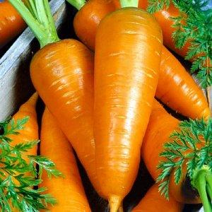 Морковь Сахарная мечта F1 ~2178