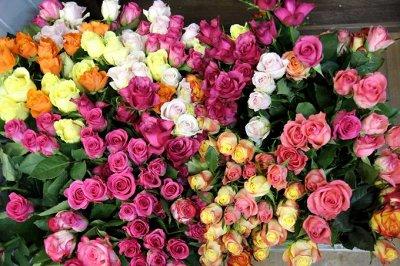 Розы Сибири !  Редкие Сорта🌹 Предзаказ Весна 2021 — Как упакованы — Декоративноцветущие