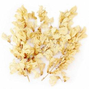 Акация белая (цветы)