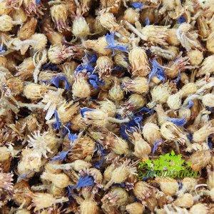 Василёк синий (цветы)