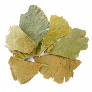 Гинкго билоба (лист)