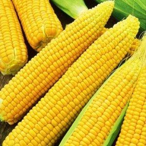 Кукуруза сахарная Лакомка Белогорья 5г Плазма