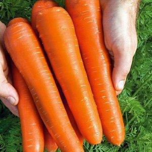 ПС Морковь Белочка F1~2169