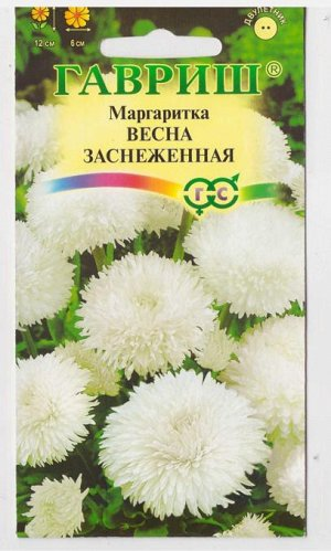 Маргаритка Весна Заснеженная (Код: 2591)