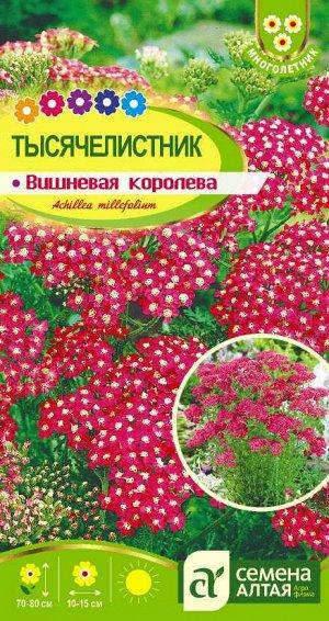 Цветы Тысячелистник Вишневая Королева/Сем Алт/цп 0,1 гр. многолетник