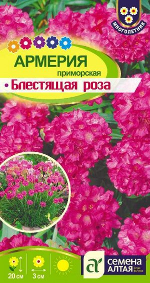 Цветы Армерия Блестящая роза приморская/Сем Алт/цп 0,03 гр. многолетник
