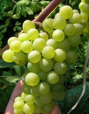 Виноград Кристалл (Код: 81996)