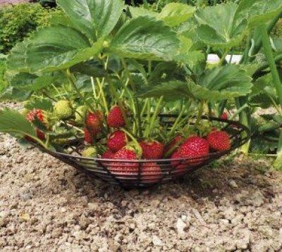 Для дома, дачи, красоты! Тысячи полезных мелочей   — Дача Сад — Сад и огород