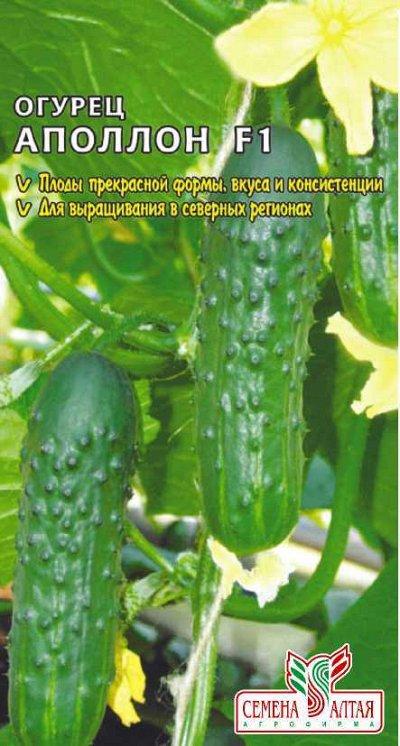 Семена Алтая. Отличная всхожесть,Огромный выбор сортов. — Огурец, патиссон, перец — Семена овощей