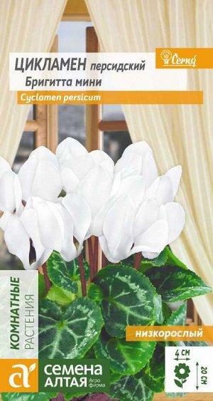 Цветы Цикламен Бригитта мини /Сем Алт/цп 3 шт.