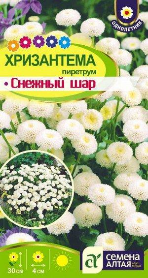 Цветы Хризантема Снежный шар пиретрум/Сем Алт/цп 0,01 гр.