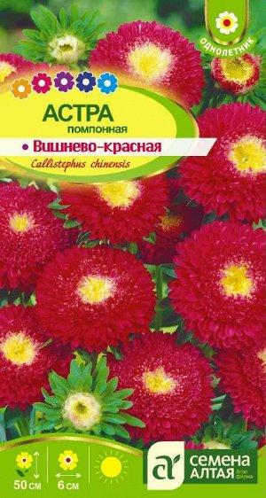 Астра Помпонная Вишнево-Красная/Сем Алт/цп 0,2 гр.