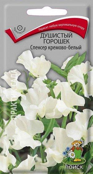 Душистый горошек Спенсер кремово-белый