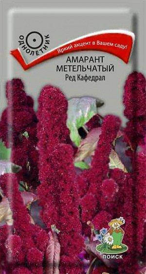 Амарант Метельчатый Ред Кафедрал