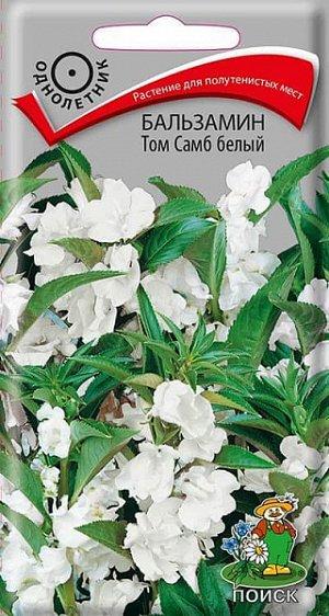 Бальзамин Том Самб белый (махровый)