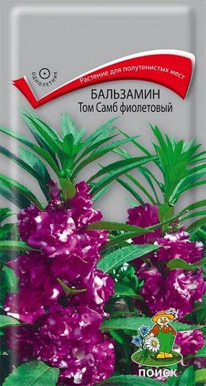 Бальзамин Том Самб фиолетовый (махровый)