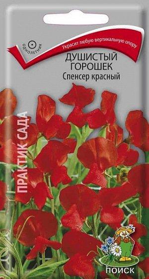 Душистый горошек Спенсер красный