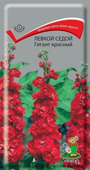 Левкой Седой Гигант красный