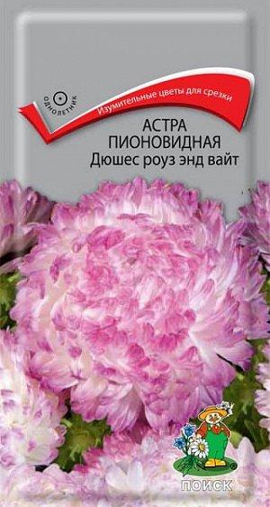Астра Пионовидная Дюшес роуз энд вайт