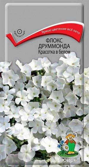 Флокс Друммонда Красотка в белом