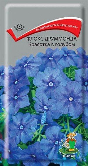 Флокс Друммонда Красотка в голубом