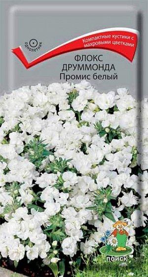 Флокс Друммонда Промис белый (махровый)