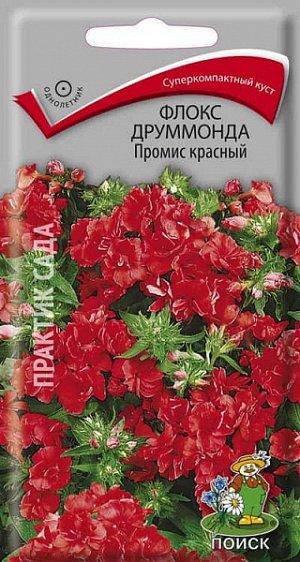 Флокс Друммонда Промис красный (махровый)