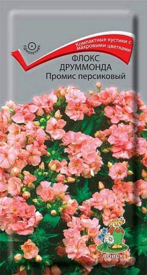 Флокс Друммонда Промис персиковый (махровый)