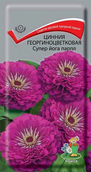 Цинния Георгиноцветковая Супер йога парпл