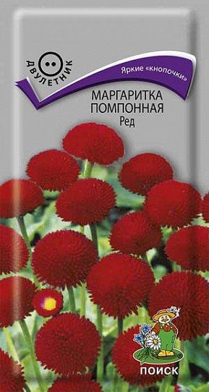 Маргаритка Ред (помпонная)