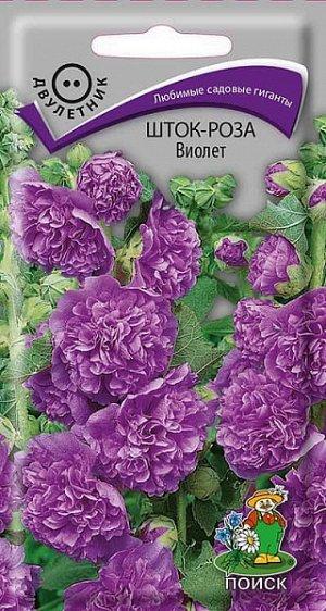 Шток-роза Виолет
