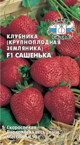 Клубника крупноплодная Сашенька F1 (земляника)