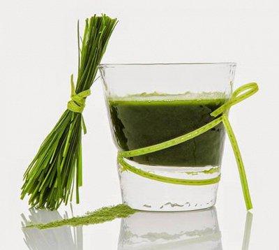 Супчики, лапша,манго, орехи,ферм.слива, чай матча  —  Зеленый сок из побегов молодого ячменя — Продукты питания
